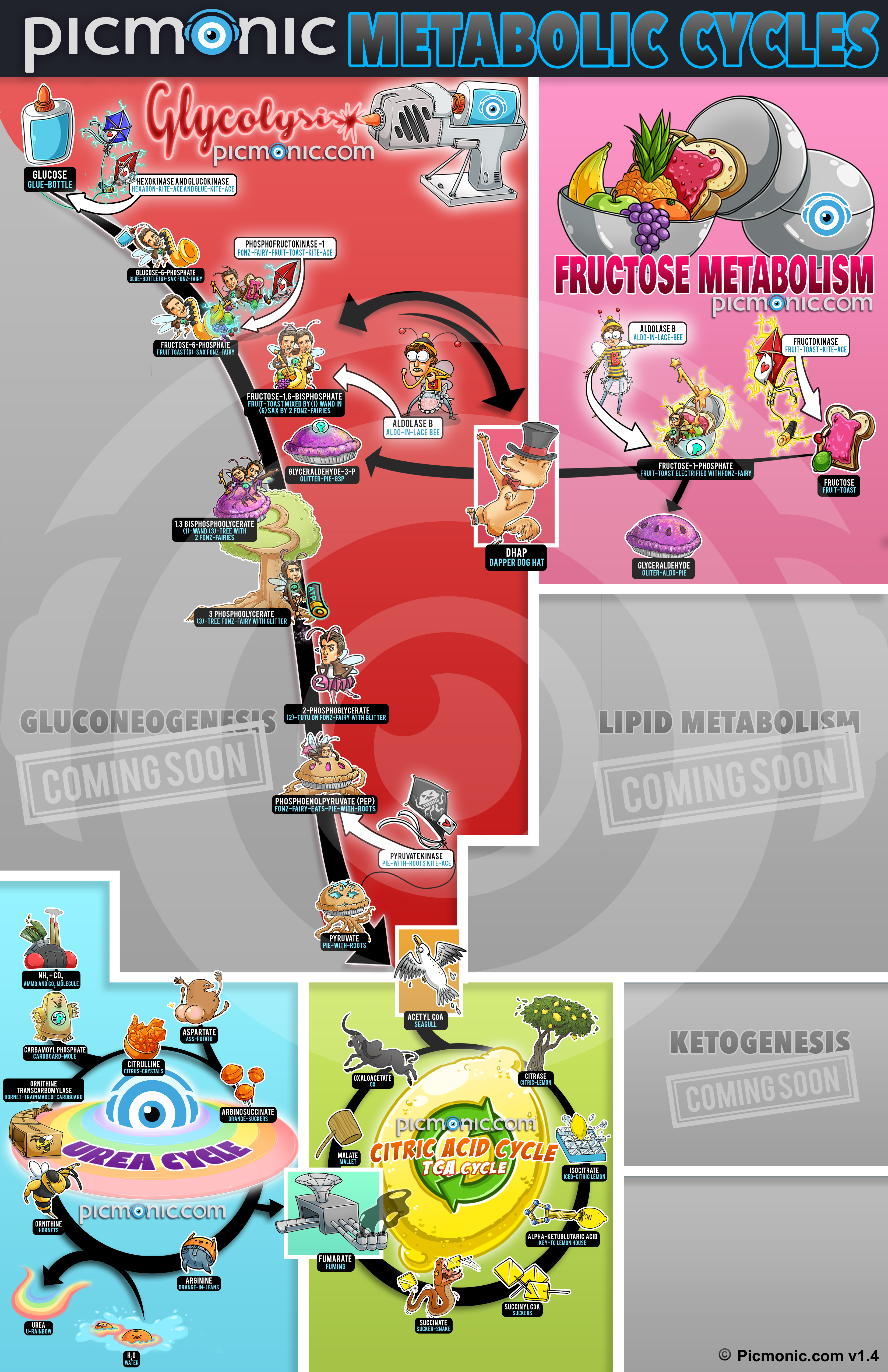 metabolism_cycles_poster_v1-4